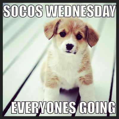Socos Wednesdays Puppy Bethere scsu picstitch shu albertusmagnus bar drinks cute swag illpic jimbo jimbosports