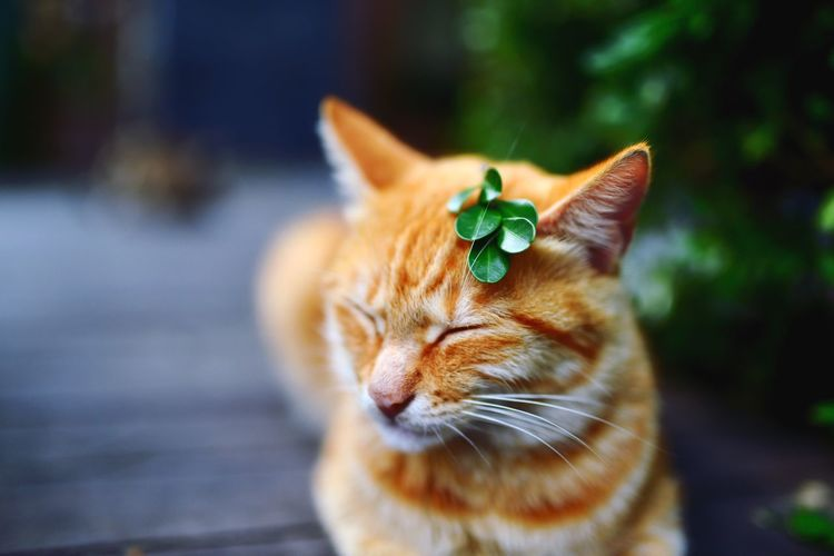 Close-Up Of Cat With Leaf On Head