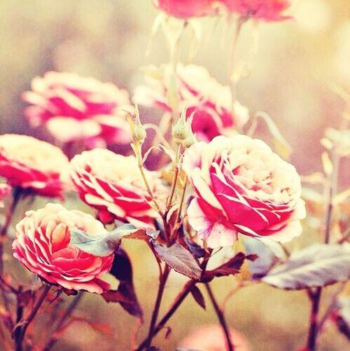 Love nature<3