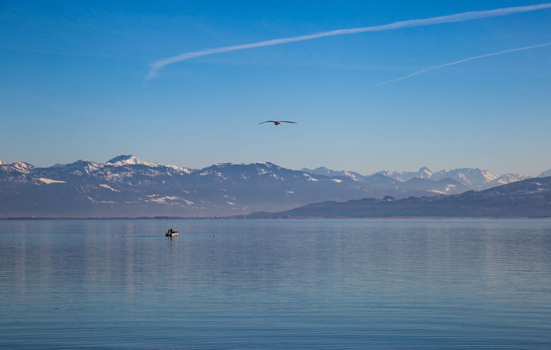 Bodensee Mountain Water Animal Themes Scenics - Nature Vertebrate Animal Animal Wildlife Outdoors Mountain Range Waterfront Tranquil Scene Beauty In Nature Bird Flying Animals In The Wild Sky One Animal Sea Tranquility Day No People Swiss Alps Swiss Swiss Mountains