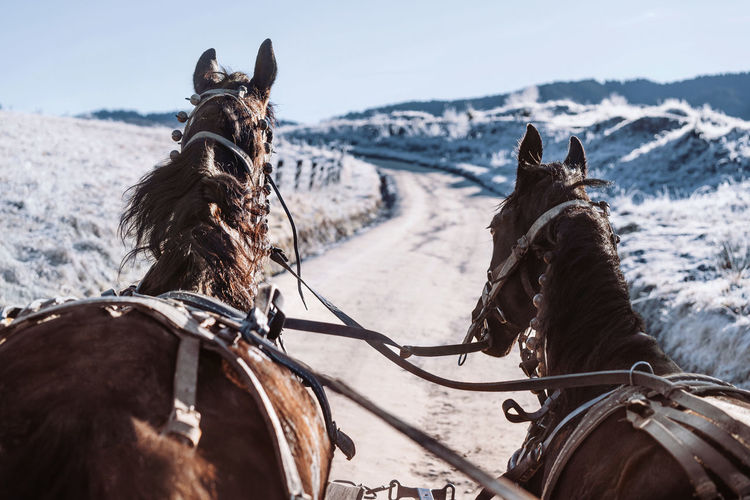 View of horses on country road in winter
