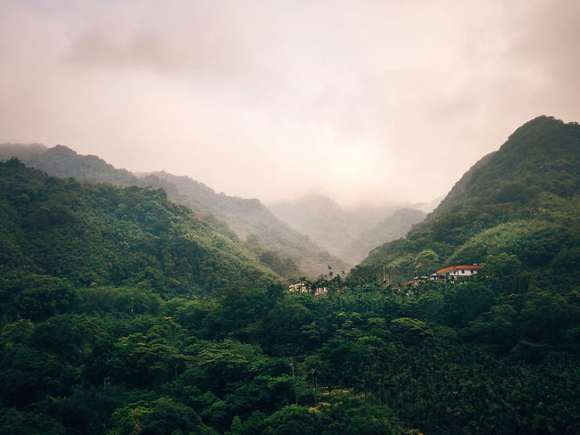 Palm Tree Taiwan Beauty In Nature Day Fog Forest Landscape Mountain Mountain Range Nature New Taipei City No People Outdoors Scenics Sky Taipei Tranquility Tree An Eye For Travel