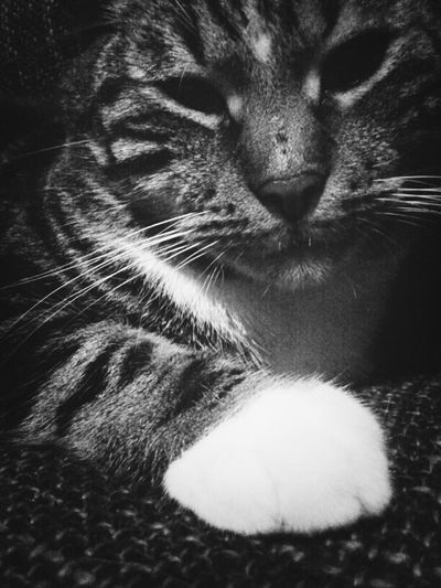 Pixel The Cat