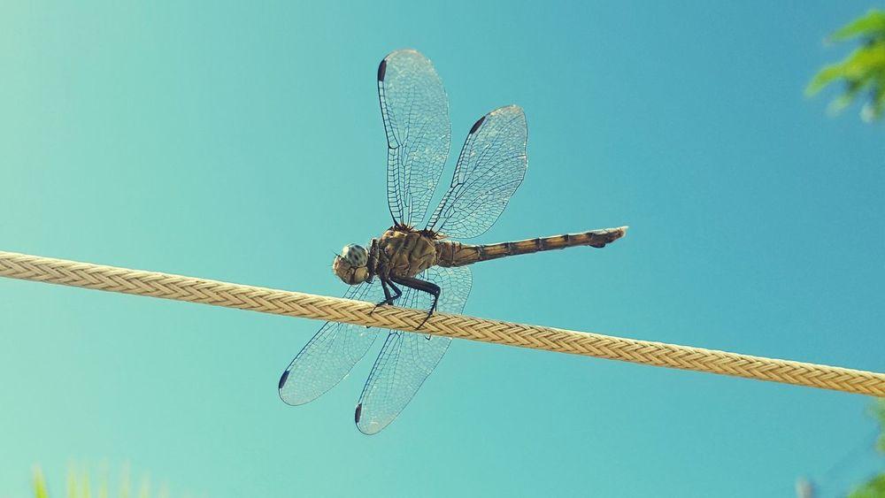 Dragonfly Transparent Wings EyeEmNewHere The Week On EyeEm