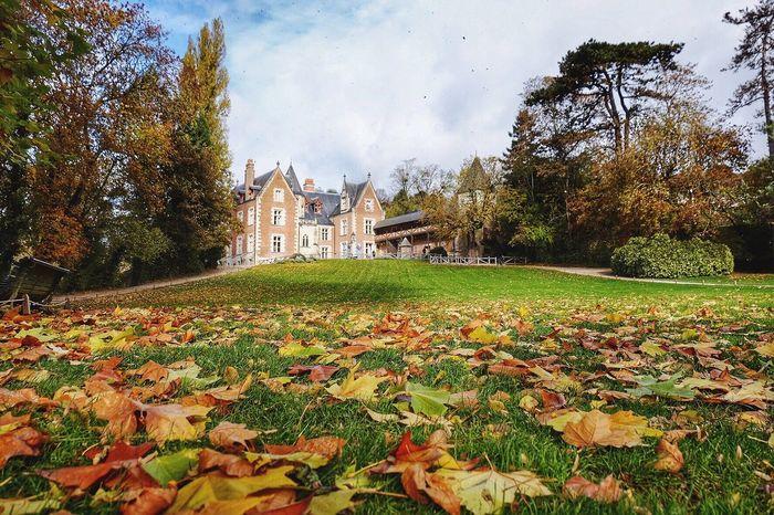Autumn Autumn Colors Tree Nature Nature Collection Leaf Château Val De Loire Clos Lucé Amboise France Europe Eurotrip