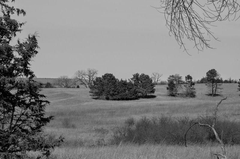 Visual Journal February 2017 Thayer County, Nebraska B&W Landscape Beauty In Nature Branch Clear Sky Day EyeEm Best Shots Grass Growth Landscape Landscape_Collection MidWest Nature Nebraska No People Oregon Trail Outdoors Photo Diary Rural America Scenics Sky Small Town Stories Tranquil Scene Tranquility Tree Visual Journal