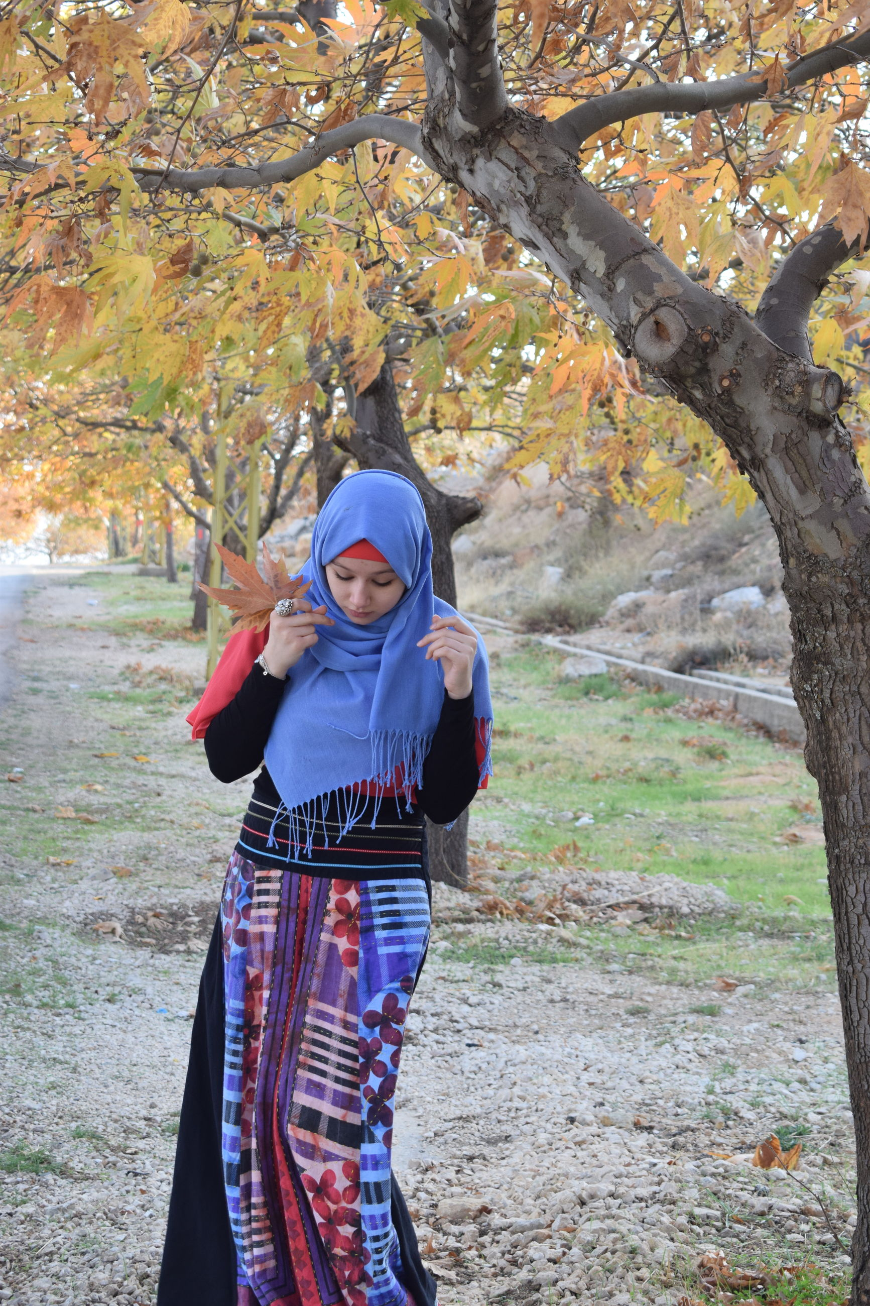 tree, real people, leisure activity, one person, autumn, front view, lifestyles, casual clothing, day, standing, change, outdoors, young women, leaf, nature, full length, young adult, growth, people