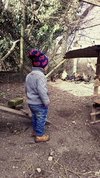 Trying to catch the hens Childhood Outdoors Farm Hens And Chickens Nephew ♡ Babyboy ❤ Sunday Children Photography Hens