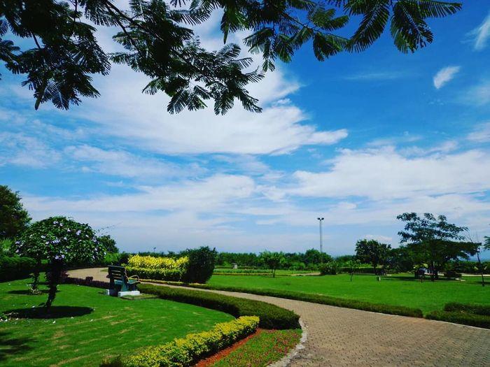 Tree Blue Sky Grass Cloud - Sky Green Color