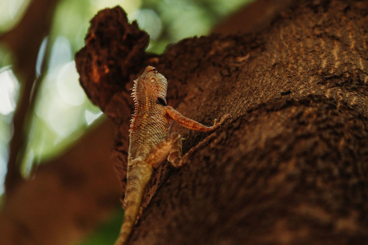 Animal Wildlife Animals In The Wild Animal Themes Animal One Animal Close-up Selective Focus No People Reptile Nature Lizard Day Brown Tree Rock Solid Vertebrate Outdoors Tree Trunk Plant