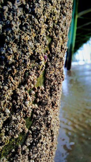 Barnacles on the Pier. PhotographybyTripp Smartphone Photography Phoneography Samsung Galaxy Note 5 Camera360Ultimate Pixlr Barnacles Sea_collection Sea Coast Up Close And Personal Macro_collection Macro_collection Nature_collection EyeEm Best Shots EyeEm Nature Lover Selective Focus Manual Focus