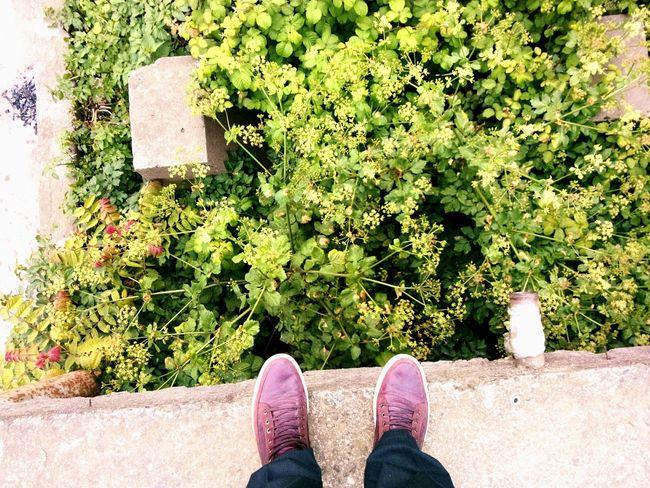 Foot Taking Photos Photoshoot Istanbul Turkey Patika Trekking PhonePhotography Way Green Garden Flowers Gezinti Yoros Kalesi Goodday Yürüyüş Gezmeler