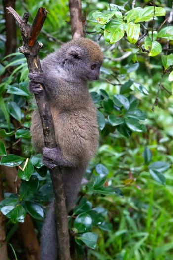 Squirrel sitting on tree