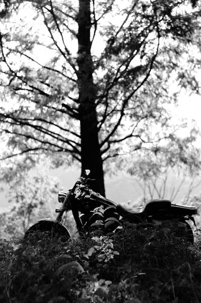 Blackandwhite Newlens Pentaxk7 Bw_lovers Black & White EyeEm Gallery Monochrome Planar Planar50/1.4 Carl Zeiss Bw_collection Pentax Oldlens Motorcycles Pentax K-5 Metasequoia