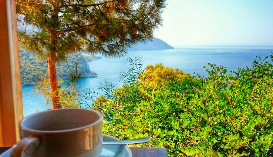 Drink Food And Drink Refreshment Water Freshness Tree Sea Table Close-up Growth Plant Tranquil Scene Hot Drink Beverage Green Color Branch Tourism Day Flower Tranquility Nerede Kabakkoyu Mugla Fethiye Kabakvaley Green
