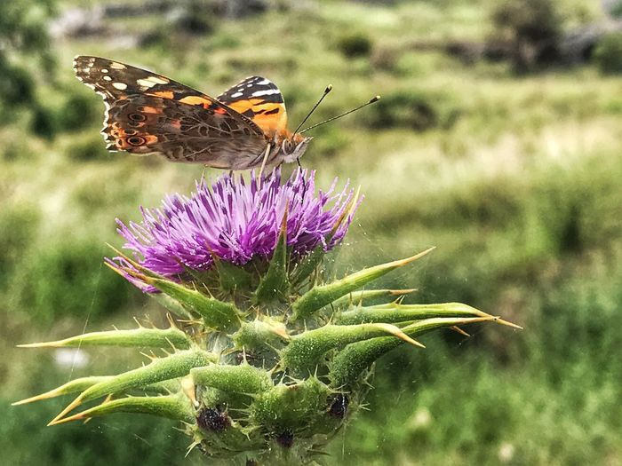 butterfly and flower Flower Animal Animal Themes Animal Wildlife Flowering Plant Animals In The Wild Invertebrate Insect Plant Beauty In Nature One Animal Vulnerability  Animal Wing Growth Butterfly - Insect Fragility Flower Head Focus On Foreground Close-up Nature