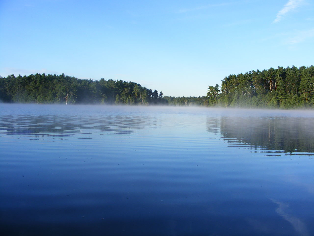 water, tree, tranquil scene, tranquility, reflection, nature, lake, no people, beauty in nature, scenics, blue, outdoors, sky, day, forest, clear sky
