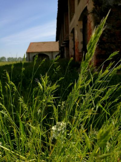 Castello Nature Erba Briona Campi Actor Attrice Horrormovie Preparation Rural Scene Photography Photooftheday Photographic Memory Photos Phoyograph Me Verde Green Green Color Happy Happy Time Agriculture Day No People Architecture