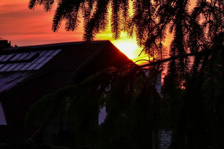 Sunset Summer