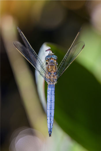 Beauty In Nature Close-up Dragonflies Dragonfly Focus On Foreground Insect Insect Photography Insects  Insects Collection Macro Macro Beauty Macro Insects Macro Nature Macro Photography Macro_collection Nature Selective Focus