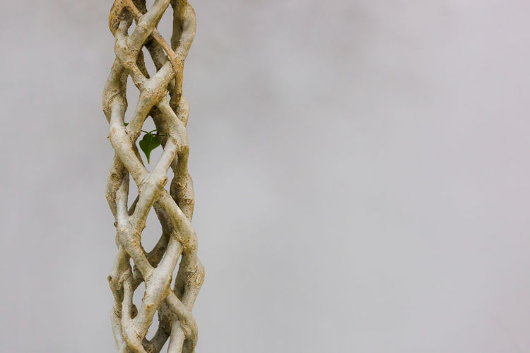 Close-up of rope tied to metal against white background