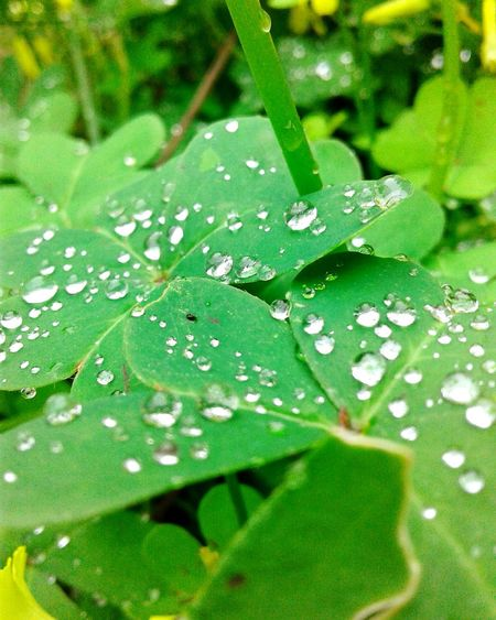 Nature Green Color Beauty In Nature Drop Rainy Days Nature Plants Nature_collection Rainy Day