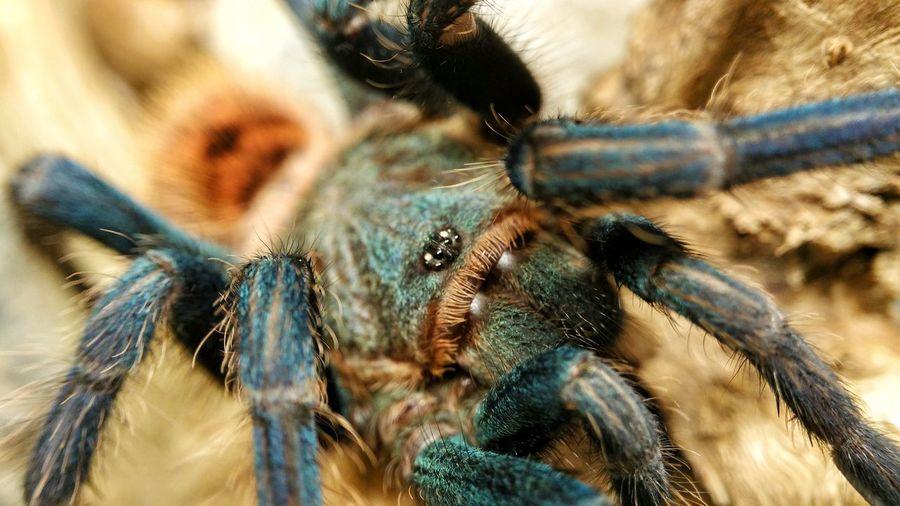 Close-up of tarantula