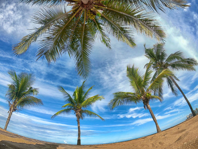 Brazil HDR Beach Beauty In Nature Cloud - Sky Coconut Palm Tree Day Gopro Growth Horizon Over Water Idyllic Land Nature No People Outdoors Palm Leaf Palm Tree Plant Scenics - Nature Sky Tranquil Scene Tranquility Tree Tropical Climate Tropical Tree