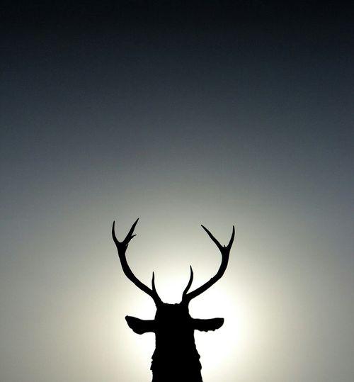 Open Edit Animal Natural Beauty