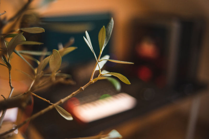 Beauty In Nature Bonsai Close-up Day Flower Flowering Plant Focus On Foreground Fragility Freshness Green Color Growth Indoors  Leaf Nature No People Plant Plant Part Potted Plant Selective Focus Technology Vulnerability