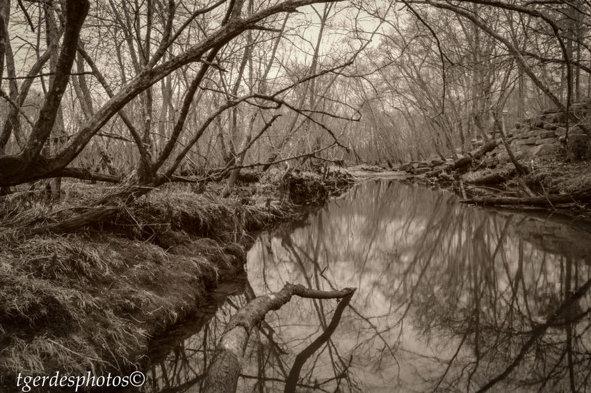 Relection On Water Swamp Bare Tree Beauty In Nature Branch Day Eerie Forest Nature No People Outdoors River Scenics Sepia Photography Shadows Sky Tranquil Scene Tranquility Tree Water