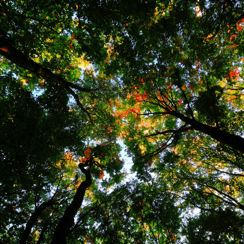 Greenwarden Tree Low Angle View Growth Nature Backgrounds Full Frame Outdoors Beauty In Nature No People Branch Green Color Day Tranquility Leaf Forest Sky Scenics Freshness EyeEm Ready