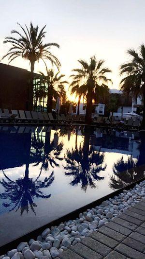 Ibiza Pool Palm Sunset Ibiza Palm Tree Water Reflection Swimming Pool Tree Outdoors Architecture