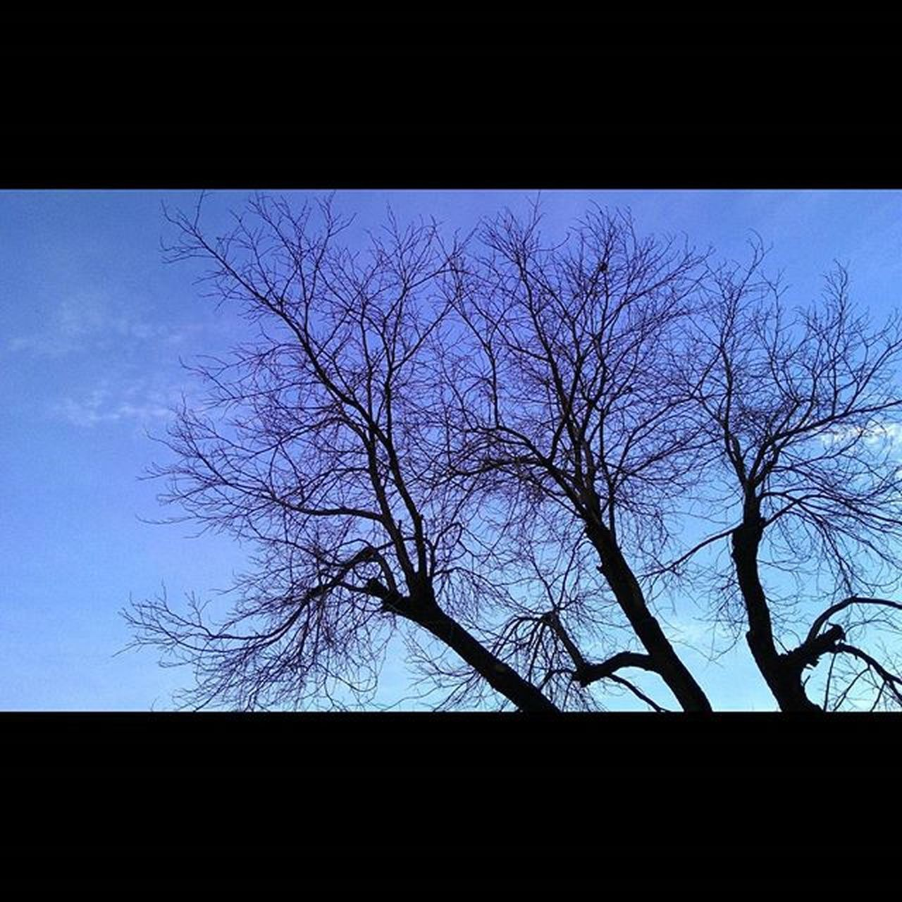 bare tree, silhouette, tree, branch, no people, outdoors, tranquility, nature, beauty in nature, low angle view, day, clear sky, sky
