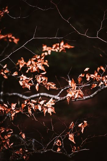 Close-up of dried autumn leaves at night