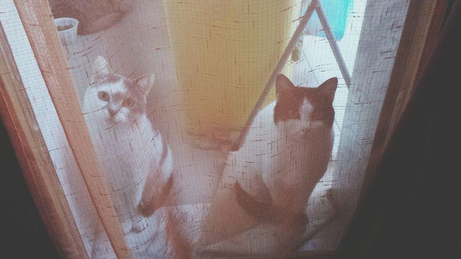 My Cats Cats Cutecats Animals Gatti Gattine Animali