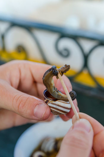 Close-up of human hand eating cooked snail with toothpick, marrakech, morocco, north africa