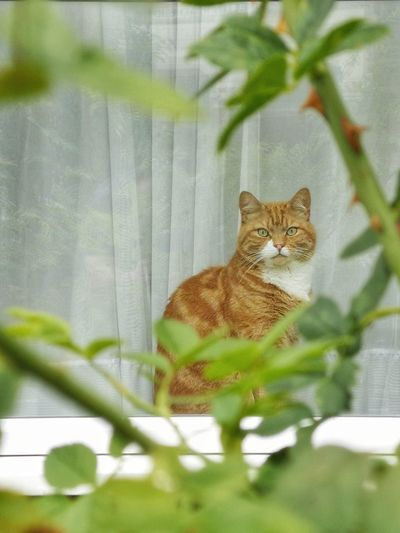 Portrait of a cat sitting