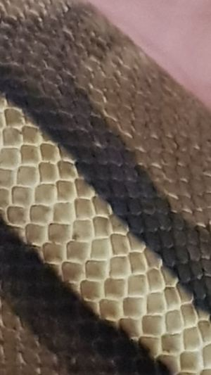 Reptile Textured  Animal Scale Animal Skin Snake Skin Snake Scales Snake Snakes Are Beautiful Snakes Of Eyeem Snake Photography