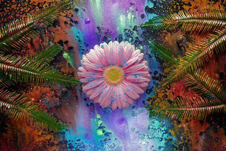 Abstract Photography Creative Photography DivineWorks Fern Leaves Gerber Daisy Inks Makeup Pigments Art Circles Pattern Eye Shadows Flowers Makeup Powders Powders