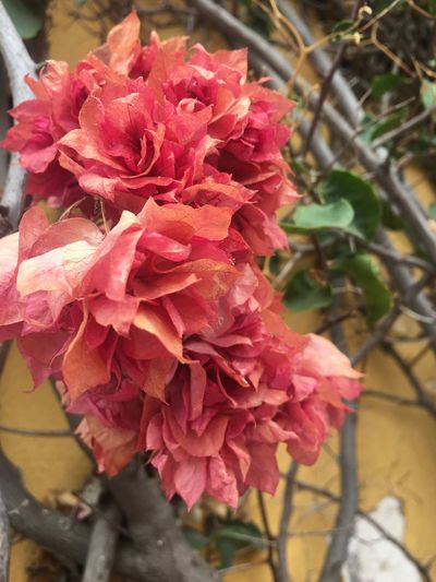Ramo Flower