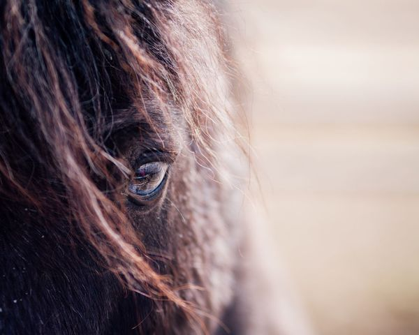 Horse Photography  Horse Focus On Foreground Human Body Part Day One Person