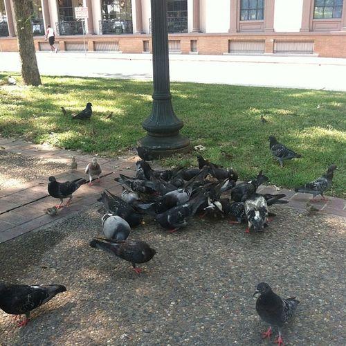 Atttaaacckkk! ? Lunchbreak Birdlady Feedingtime Pigeons sunharvestchips lol ?
