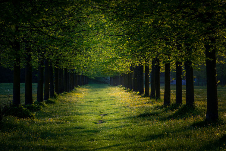 Trees Italia Peaceful View Beauty In Nature Day Direction Forest Grass Green Color In A Row Italian Italy Land Landscape Nature No People Non-urban Scene Outdoors Peaceful Plant Scenics - Nature Tranquil Scene Tranquility Tree