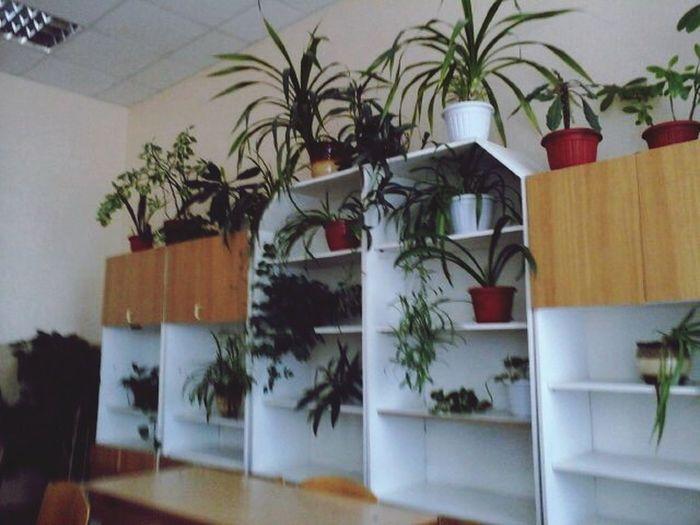 Green Grass Flowers School