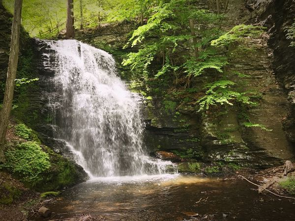 Pennsylvania waterfall Waterfall Beauty In Nature Scenics Nature Forest No People Tranquil Scene Waterfalls Waterfall_collection Landscape Scenic View Nature Nature_collection Nature Photography Naturelovers