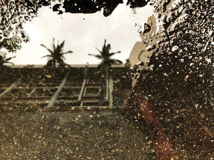 雨後 Tree Nature Sky Plant Drop Water First Eyeem Photo EyeEmNewHere