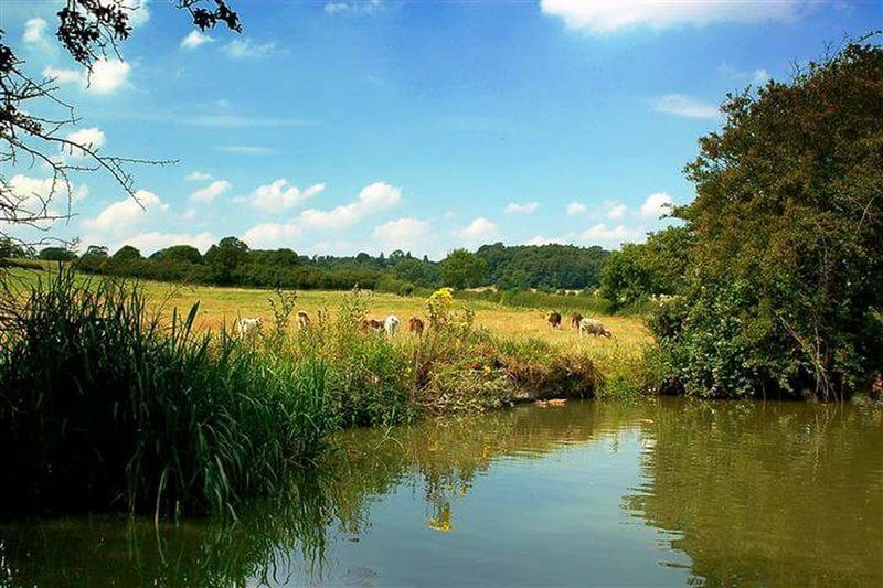 Animal Themes Water Sky Tranquility Grass Green Color Waterfront Tranquil Scene Lake Nature Scenics Livestock Cloud Field Beauty In Nature Domestic Cattle Plant Domestic Animals Medium Group Of Animals Growth Foxton Locks Leicestershire Market Harborough Leicester