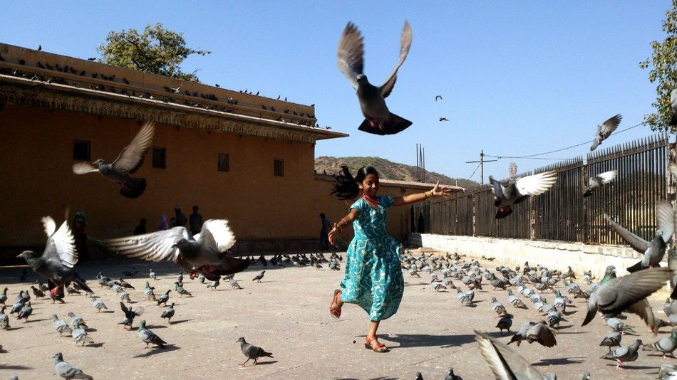 Showcase: February Jaipur Rajasthan India Happiness Birds Children Travel Photography Endlesssummer Doves