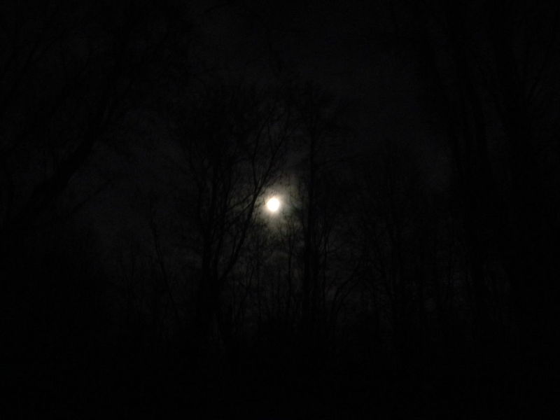 Astronomy Beauty In Nature Bright Night Clouds And Sky Full Moon Full Moon Night  Haunted Haunted Woods Moon Moon Moonlight Nature Night Nighttime Outdoors Scenics Silhouette Sky Solar Eclipse Space Supermoon Tranquil Scene Tranquility Tree